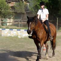Riding Riding School Horses Lesson