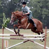 Showjumping Ride Horse Jump Information