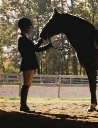 Tlc: What Every Horse Needs