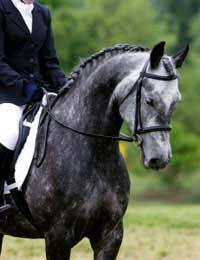Which Breed Is Best For Which Equestrian Sport?