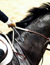 Crop Whip Riding Dressage Jockey Horse