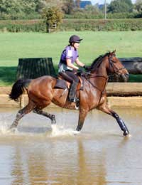 Ability Riding Lessons Categories