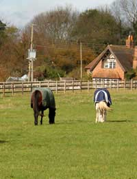 Horse Walker Exercise Healthy Time