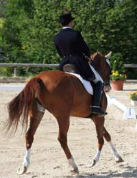 Horse Dressage Manoeuvres Gaits
