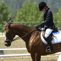 Governing Bodies Horse Riding Equestrian