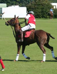 Polo Game Match Horse Pony Rider Player
